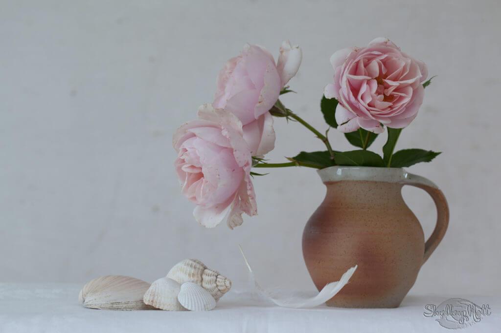 Blush Roses in a Jug