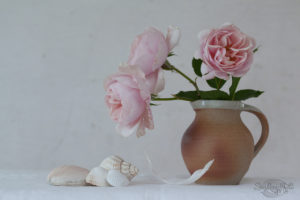 Blush Roses in a Jug