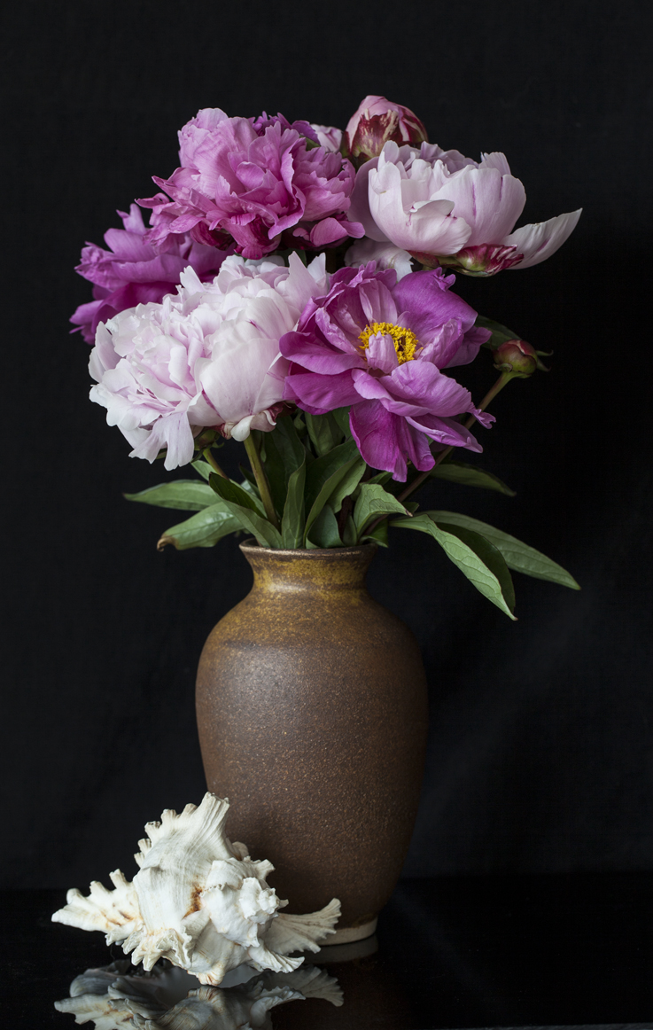 Peonies with Shell
