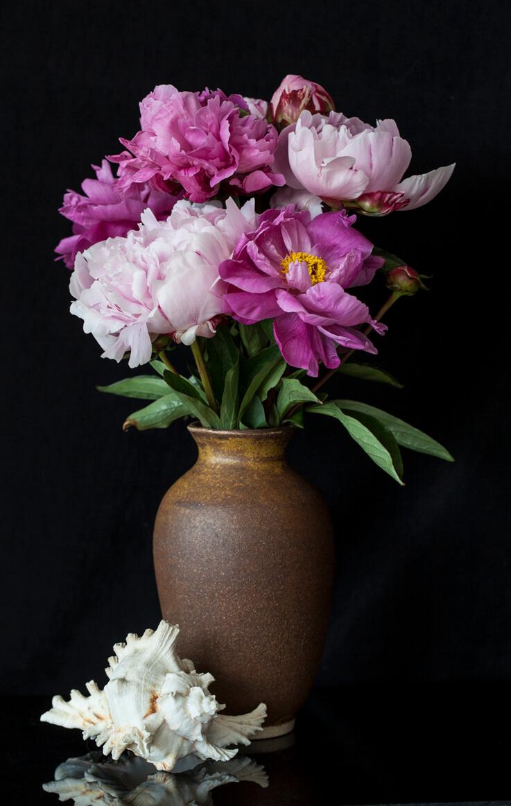 Flower Still Life Photographs Shelley N Nott