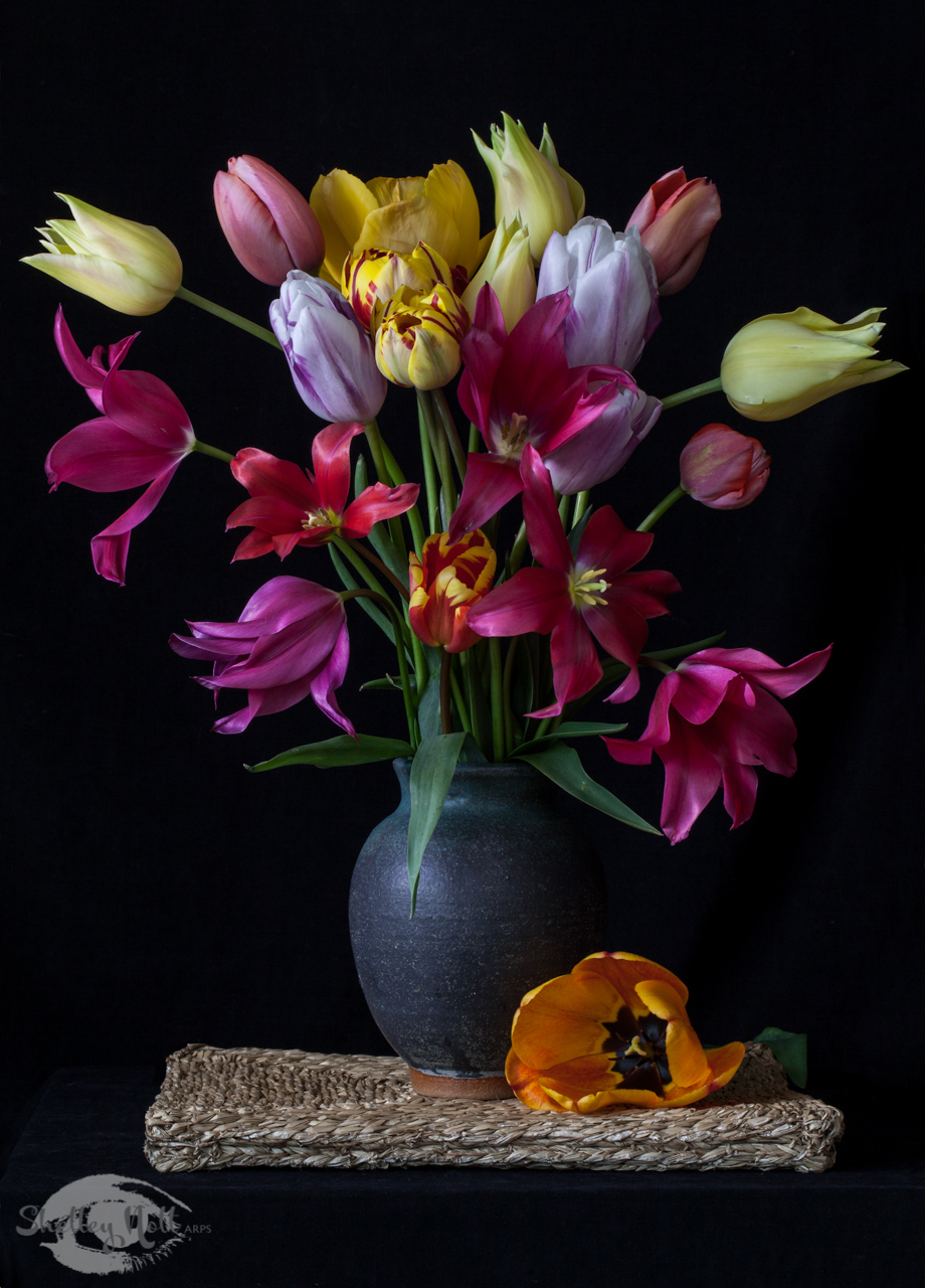 Cam additionally Tulips Pottery further The Drunken Botanist Cyber Hub Gurgaon together with Buckskin Mare In Stall moreover Prcas. on my country study