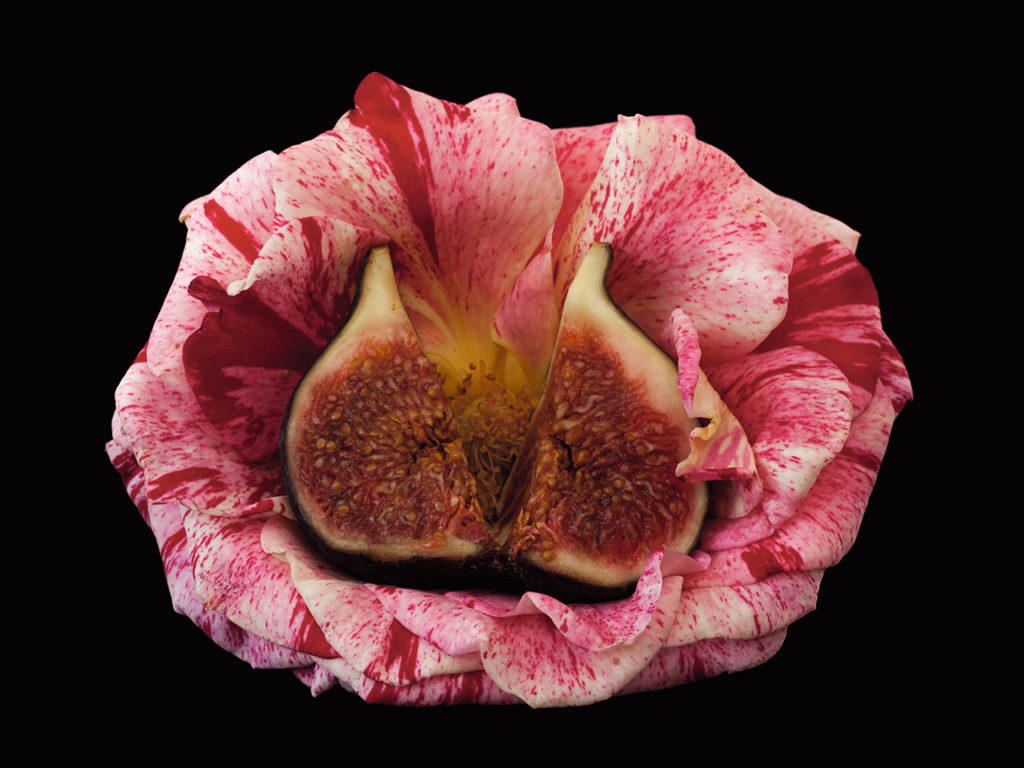 Rose and Fig
